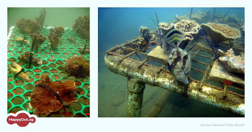 palau coral nursery online survey
